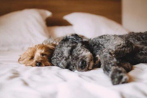 fase rem del sueño